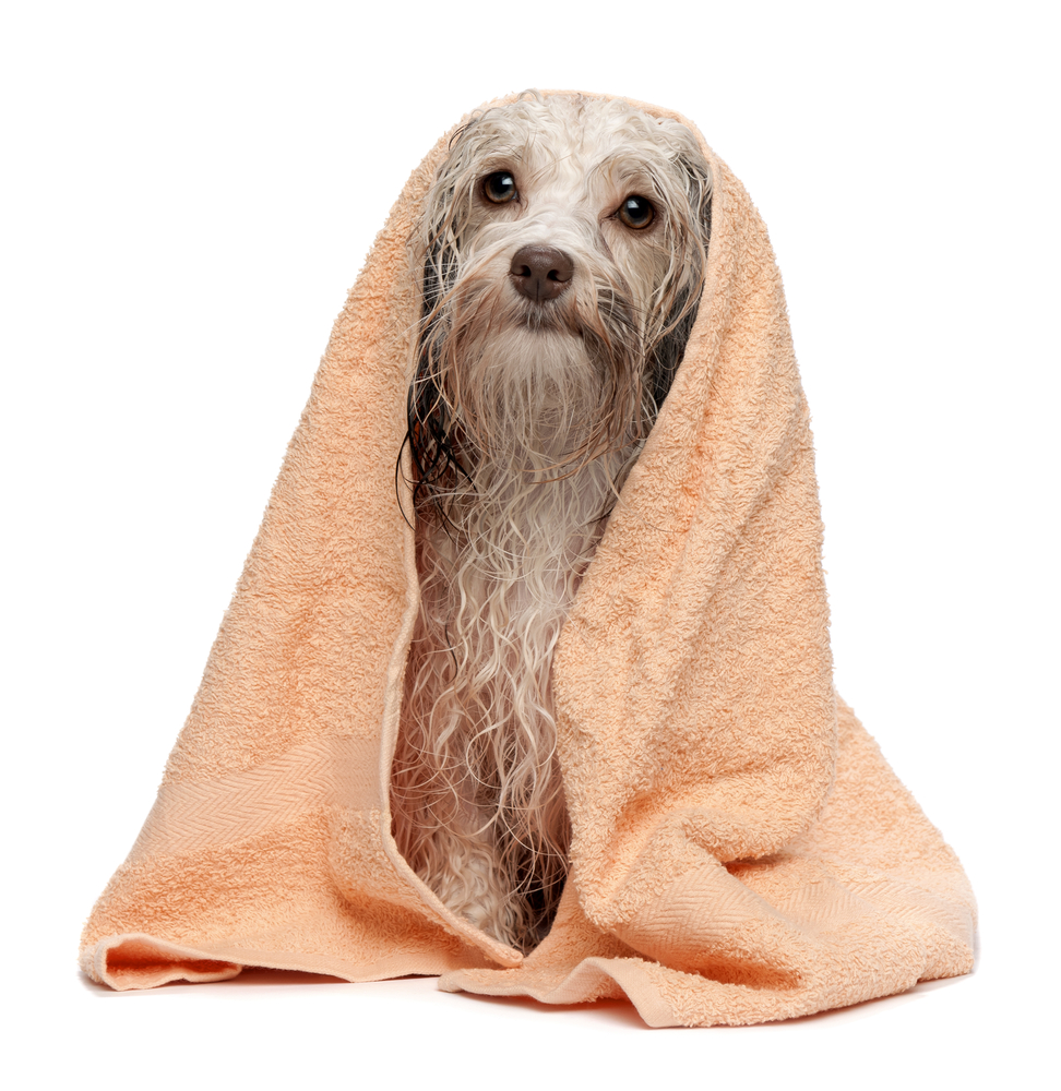 how to clean dog without bath
