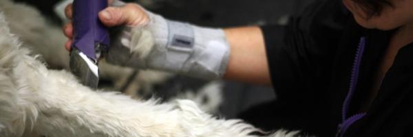 Calgary pet grooming calgary dog daycare training grooming calgary pet groomer solutioingenieria Choice Image