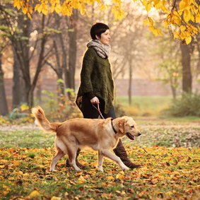 Dog Training Classes Prices