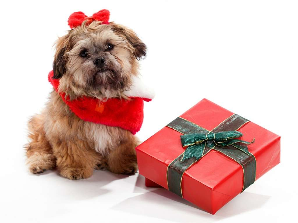Should You Gift a Pet for the Holidays? - Calgary Dog Daycare ...