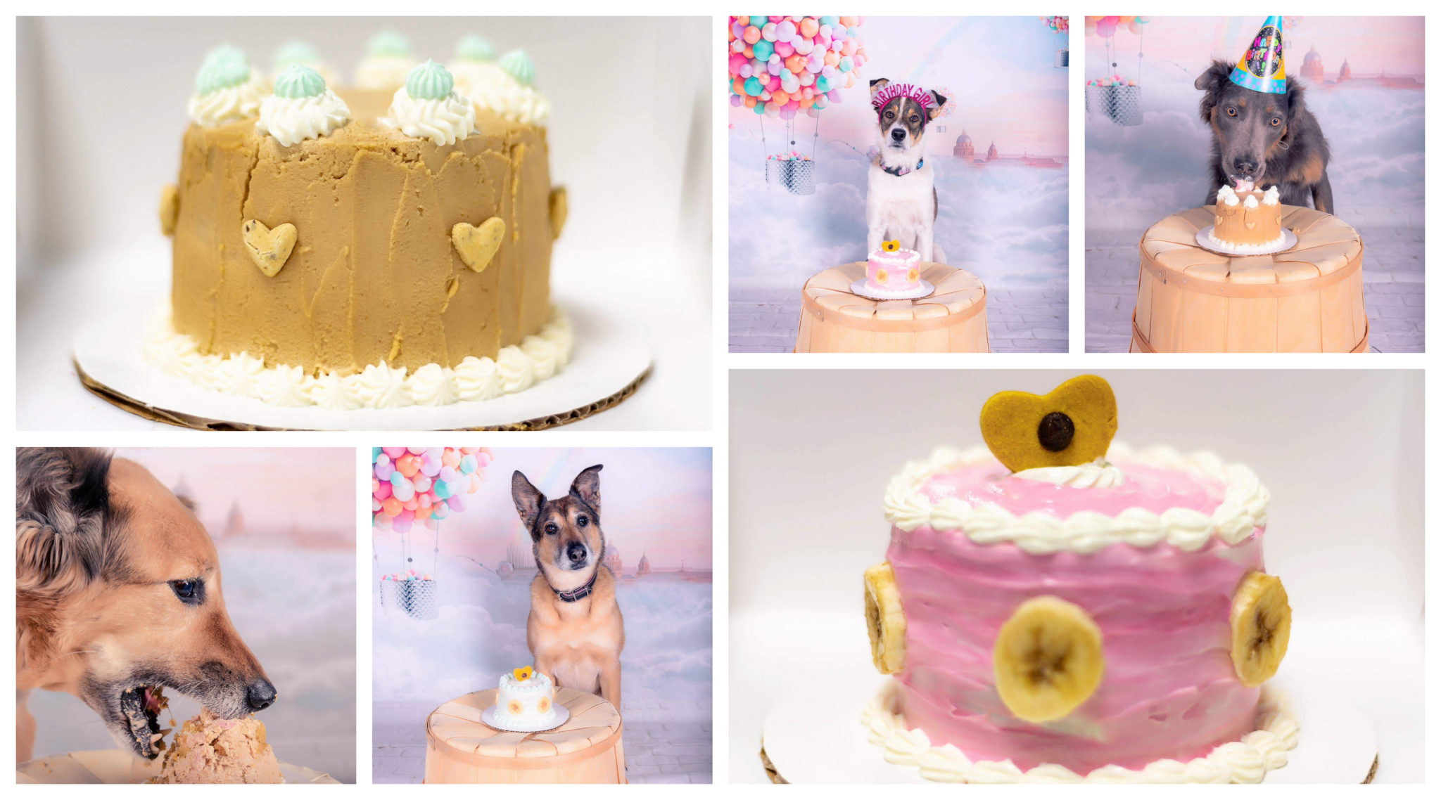 Cake Pawty Calgary Dog Daycare Training Grooming